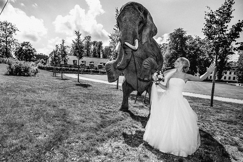 Bride and Elephant